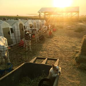 dairy farm in nyssa oregon