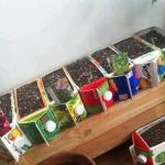 box-garden_300