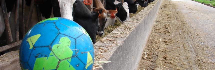 Soccer Ball Miramontes Dairy