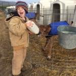 Dairylain calf feeding