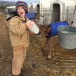 Dairylain calf feeding