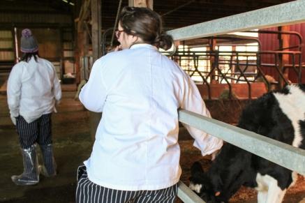 TMK_Student-petting-a-calf